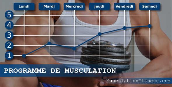 programme-musculation